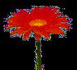 fleuriste cepourtoi